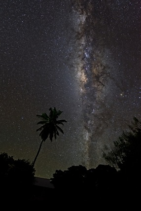 milky way with palm